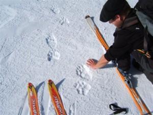 2013 : Année chaste pour les ours béarnais « Ça va encore manquer de nanas ! »