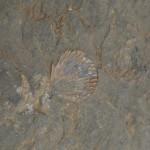 Fossile en haut du Mont perdu